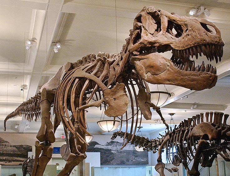 Grandeur Du American Museum Of Natural History 21
