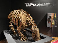 20. Giant ground sloth _DF