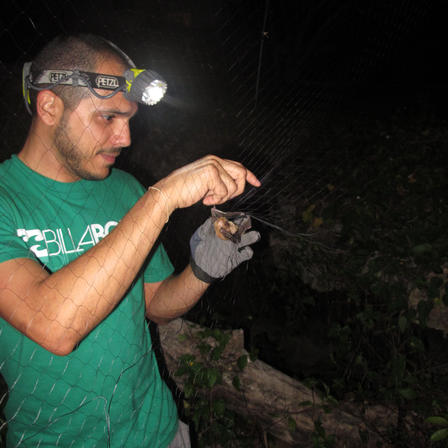 Researcher wearing headlamp, removing a bat from a net