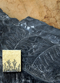 Which are fossil plants?