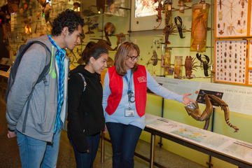 Teaching Volunteer and students observing a model of an insect leg in the Hall of Biodiversity.