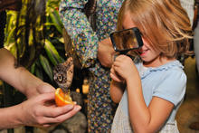 A little girl uses a magnifying glass to look at a butterfly perched on an orange slice held by an adult.