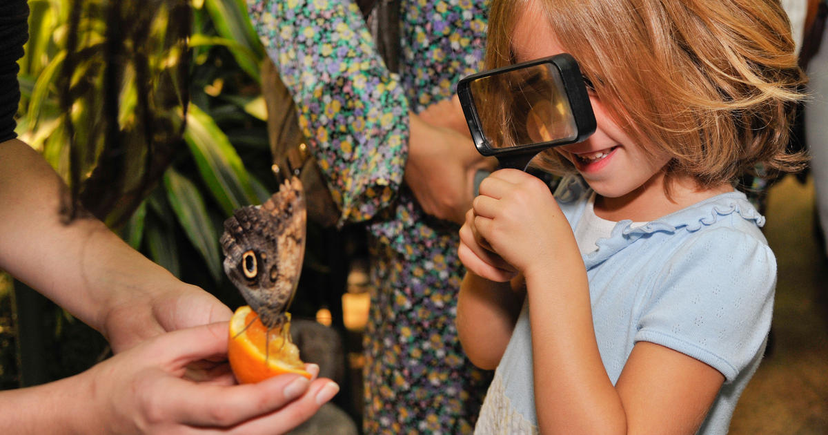 The Butterfly Conservatory: Live Butterflies Every Winter   AMNH