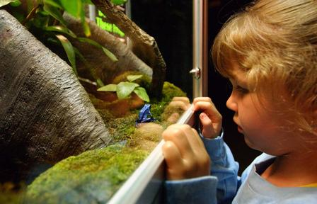 Child with dart poison frog_DF