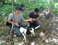 Two researchers and their dog searching for Coyote scat by a hiking trail
