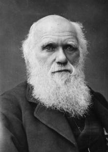 A portrait of Charles Darwin.