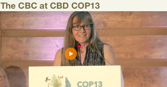 Eleanor Sterling presenting at the CBD COP13