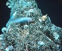 Hydrothermal vent teeming with life. Photo © University of Washington, American Museum of Natural History, and Pennsylvania State University.