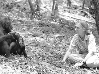 Jane Goodall in Gombe National Park in Tanzania, East Africa. Photo courtesy of Ken Regan/Camera 5.
