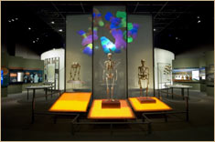 © AMNH / Denis FinninSpitzer Hall of Human Origins