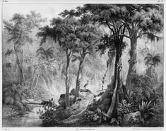 Rugenda Brazilian landscape AMNH Special Collections