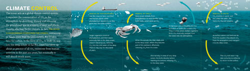 How the ocean acts as a global climate control system is illustrated in an exhibition graphic. AMNH Exhibition Department