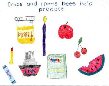 Crops and items bees help produce