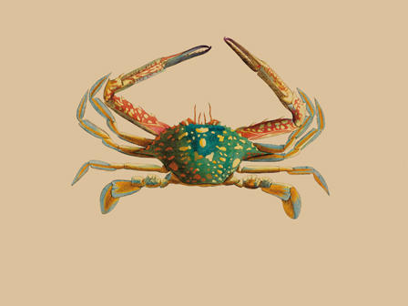 Colorful drawing of a crab.