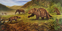"Some 125,000 years ago, during a warm interval known as the last interglaciation, megafaunal mammals were able to penetrate parts of northern North America that had previously been covered by massive ice sheets. In this reconstruction, in addition to the American mastodon (Mammut americanum), illustrated is Jefferson's ground sloth (Megalonyx jeffersonii), the flat-headed peccary (Platygonus compressus), and the western camel (Camelops hesternus).  © George ""Rinaldino"" Teichmann"