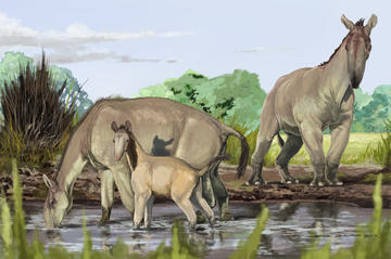 This illustration shows three large animals with long, camel-like necks and trunk-like snouts drinking water from a pond