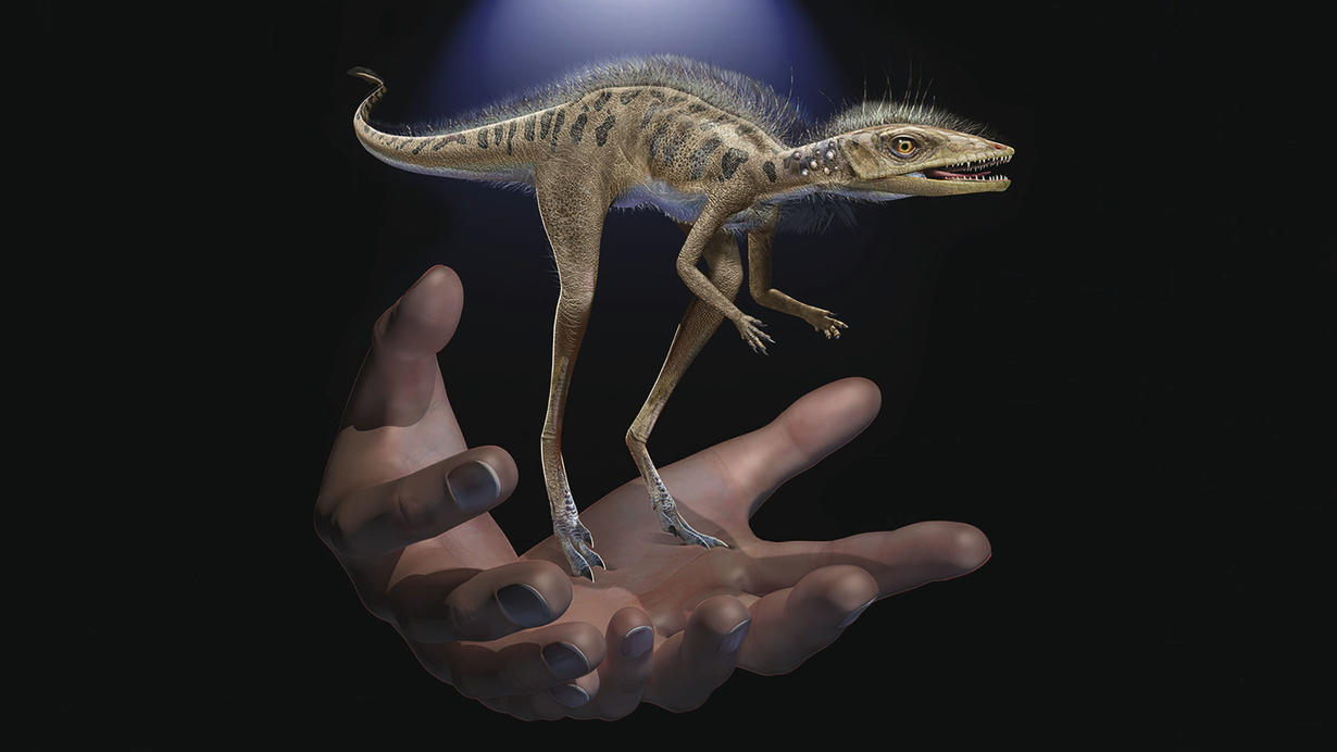 Fossils reveal dinosaur forerunner smaller than a cellphone