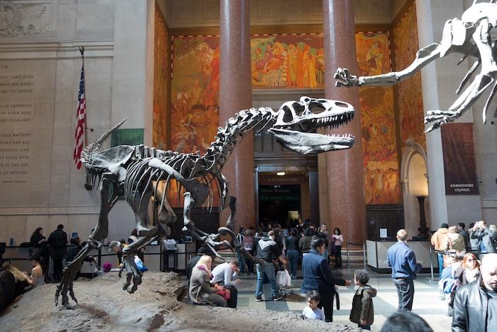 AllosaurusWEB