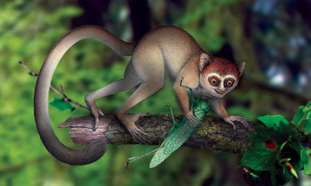 Artist's rendering of an early species of primate, climbing a tree limb.