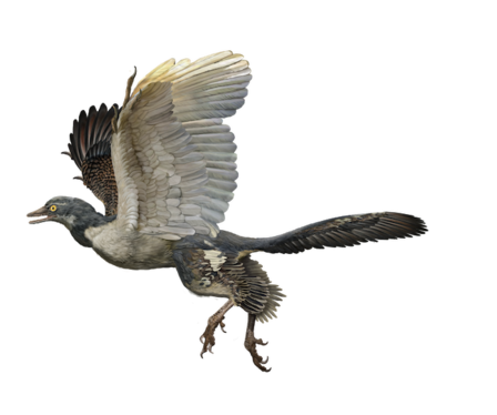 Artists Rendering of Archaeopteryx