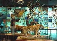 Museum display of animal species representing biodiversity of the planet