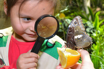 Child looks through a magnifying glass at a butterfly perched on a slice of an orange.