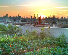 NYC Green Roof