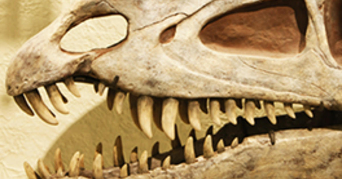 Dinosaur Facts | American Museum of Natural History