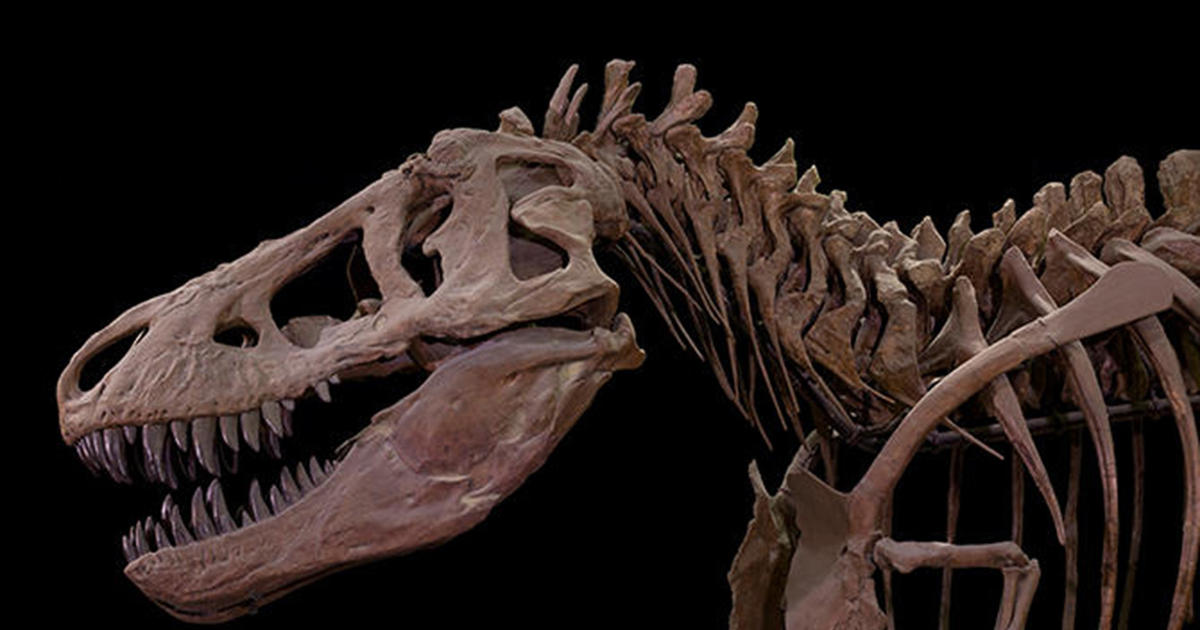 Origami Tyrannosaurus Rex stock illustration. Illustration of ... | 630x1200