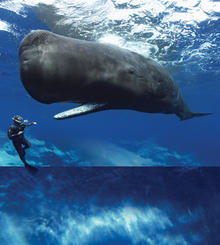 Whales giants of the deep calendar image