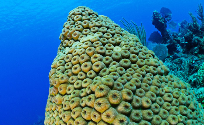 Large, pointed outcropping of star coral.