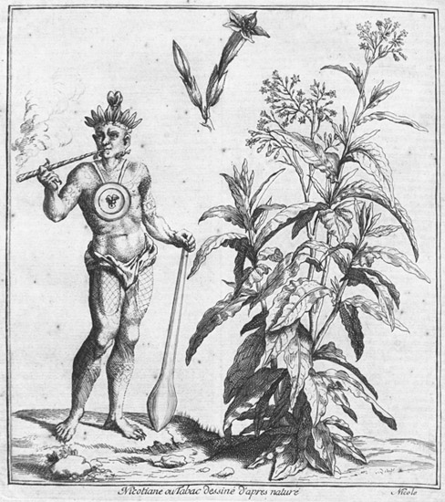 Illustration of a man standing next to a tobacco plant and smoking tobacco.