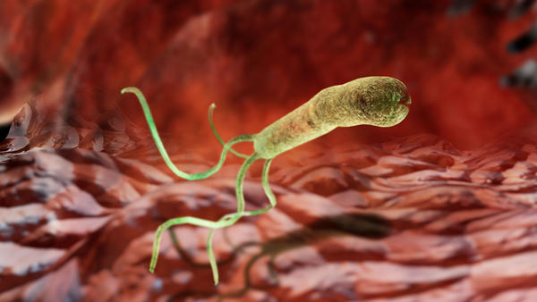 Enlarged image of Helicobacter pylori bacterium, which can live in human gut