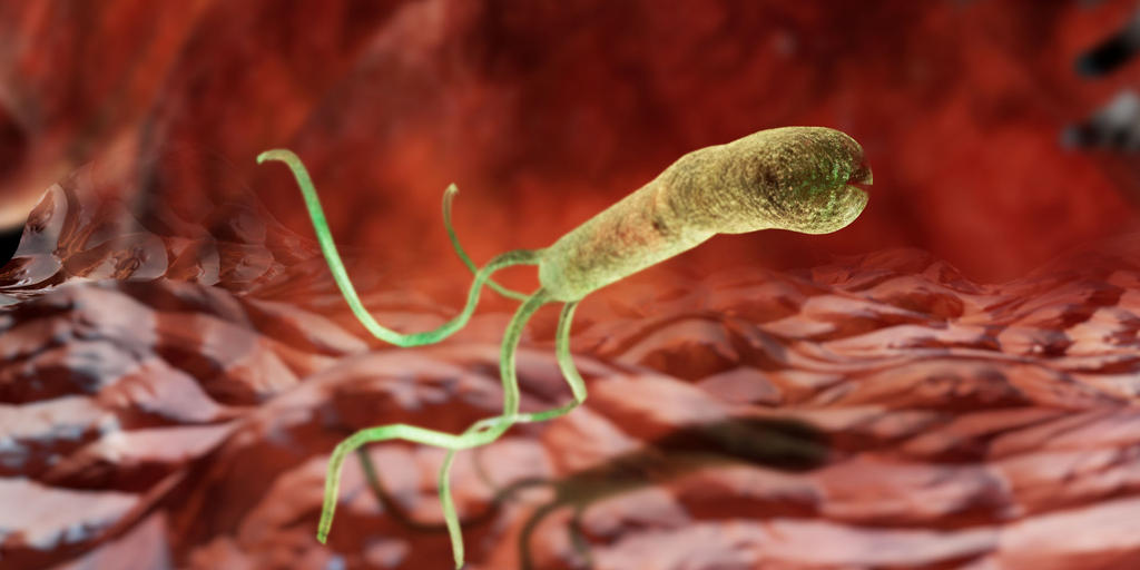 Gut Microbiome: Essential Tool for Digestion - and More | AMNH