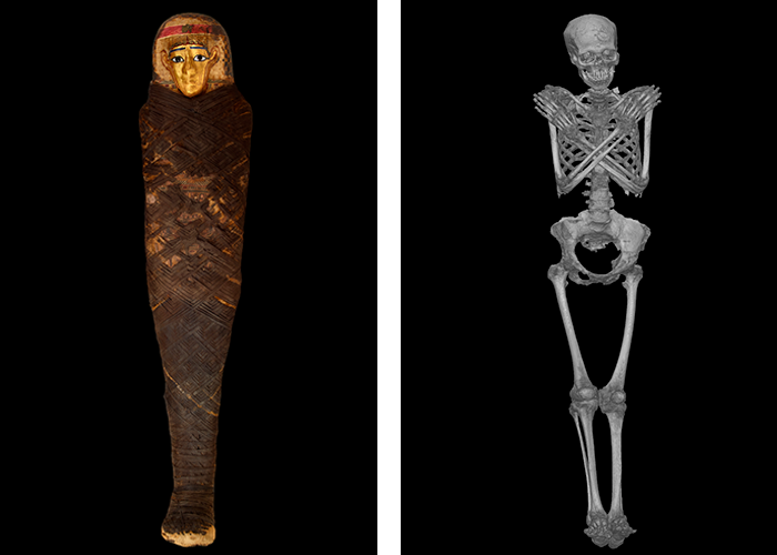 Wrapped mummy on left and the skeleton that is revealed by CT scan on the right.