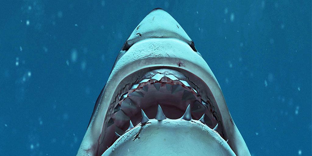 Sharks Exhibition: Opening December 2021   AMNH