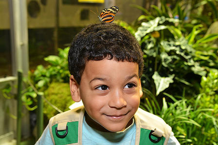 Child smiles while a butterfly lights on his head.