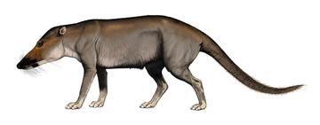 Artist's impression of Pakicetus attocki  © Carl Buell, 2006