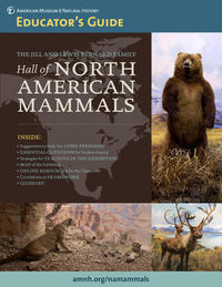 Hall of North American Mammals Educator thumb