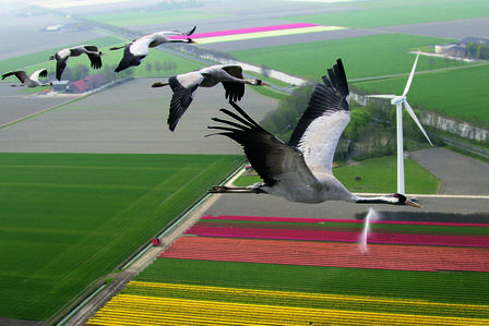 Aerial view of cranes flying over landscape.