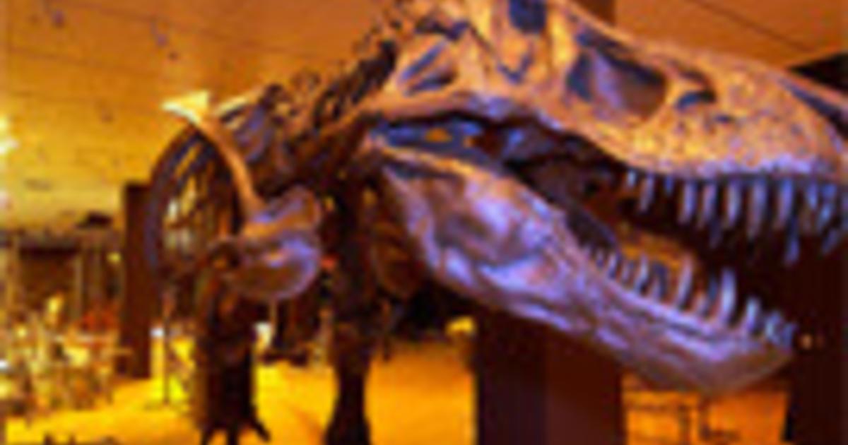 Theropod Biomechanics Amnh