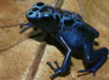 The-Amazing-Adaptable-Frog_small