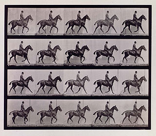 The Trot: Plate from Animals in Motion, United States, 1887 by Eadweard Muybridge. AMNH Library