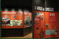 A World of Smells display case © AMNH / Roderick Mickens