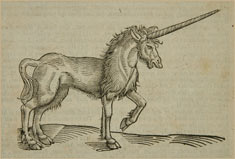 Unicorn illustration from Topsell, rare book collection American Museum of Natural History Library