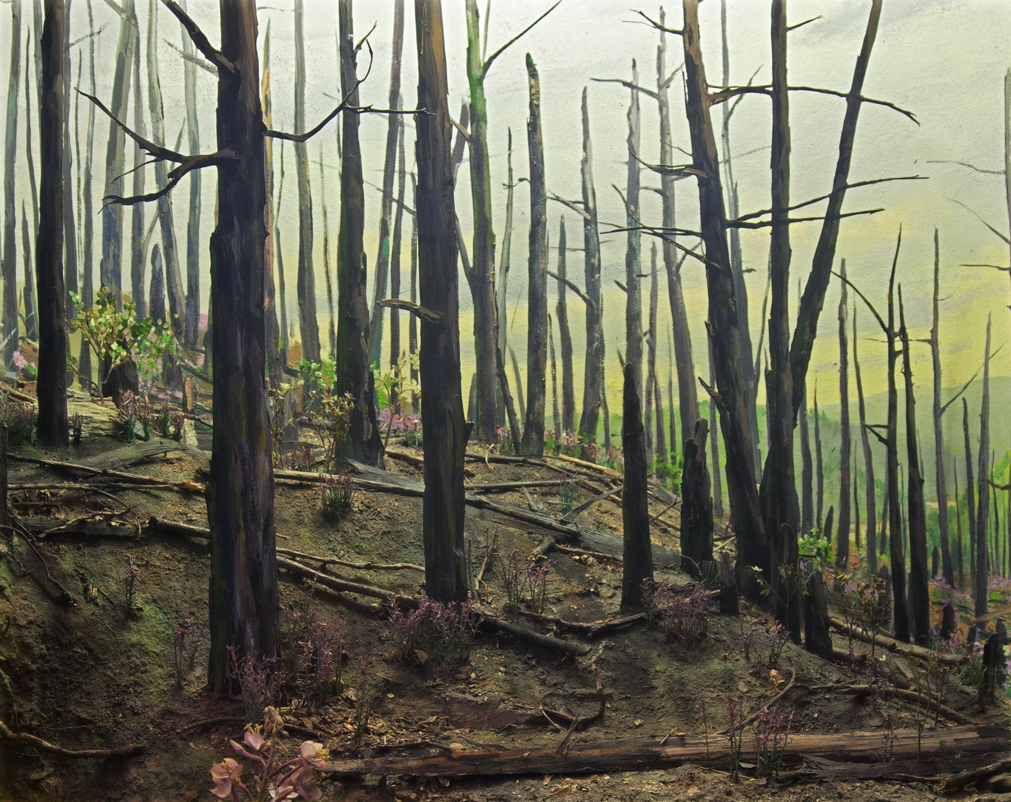 Diorama showing a forest after a fire.