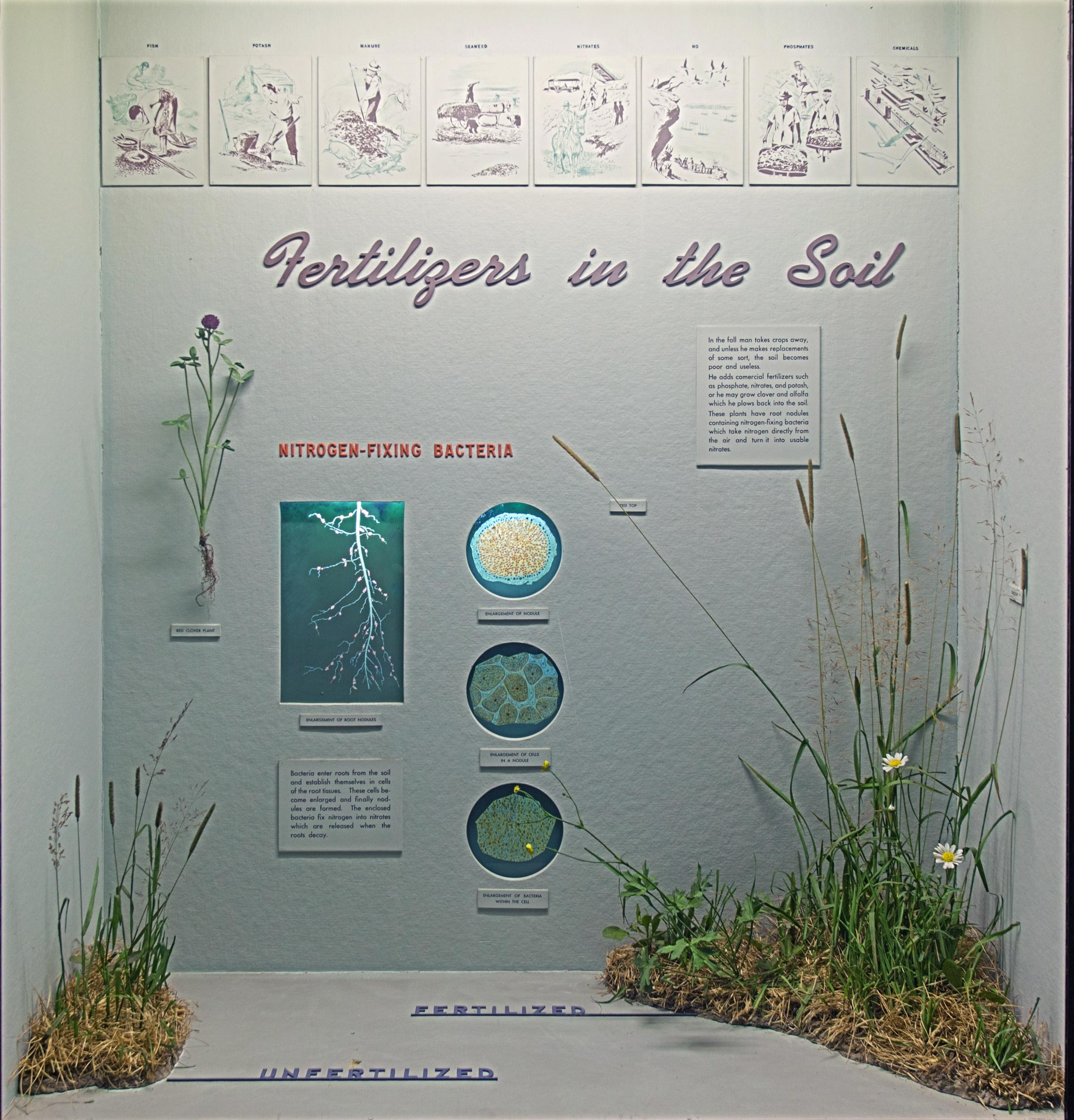 Museum case showing illustrations, diagrams and models of the fertilizers in the soil and their effects in vegetation.