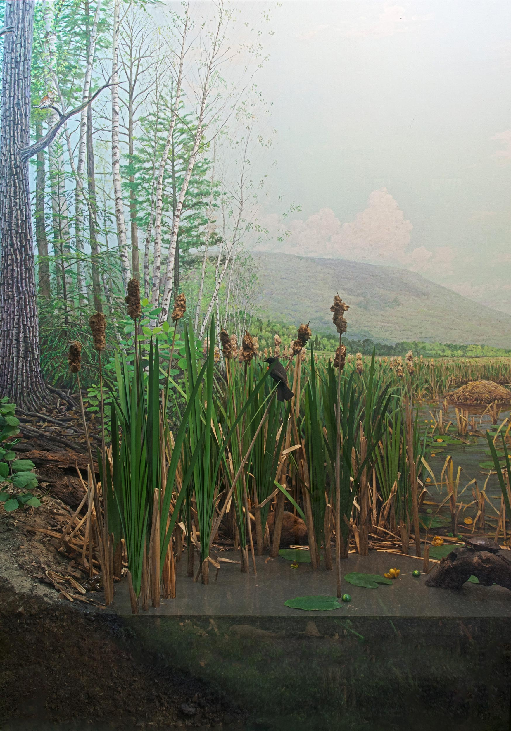 Section of a diorama showing a cross section of a lake