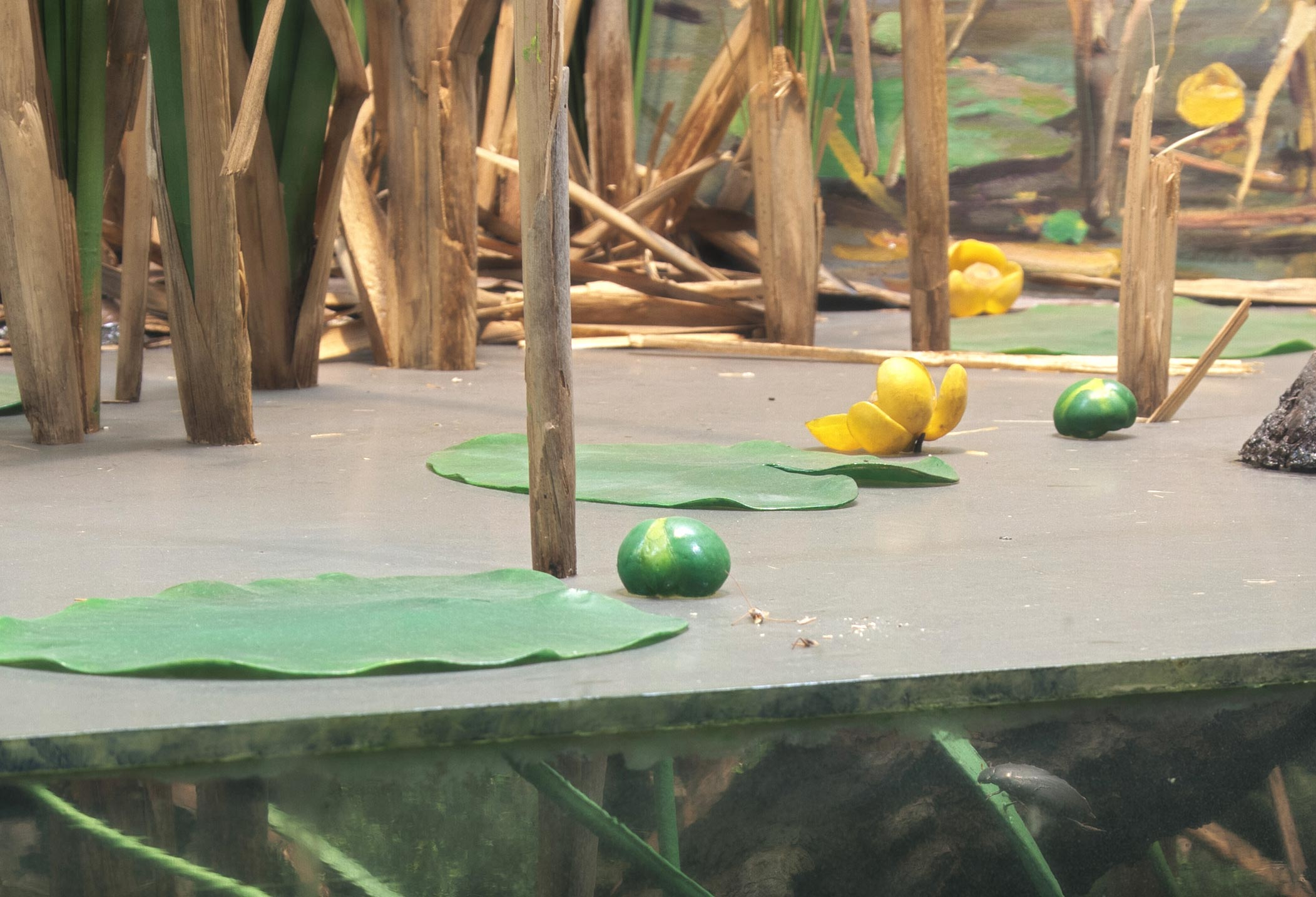 Section of a diorama showing yellow lily pads on the surface of a lake.