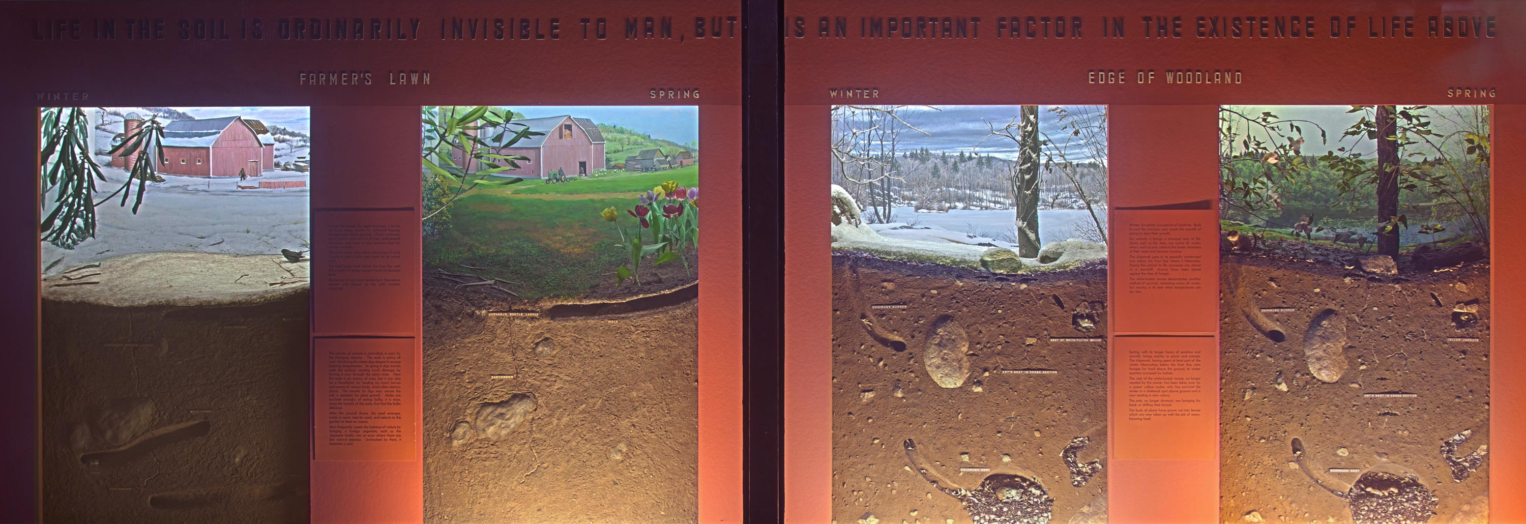 Museum installation showing four dioramas that include a cross section of the soil of the Farmer's lawn and the woodland in different seasons.